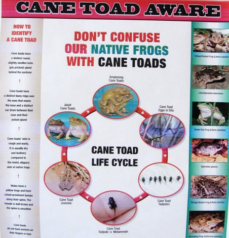 Cane Toad Aware