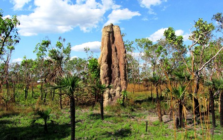 Cathedral Termite Mound