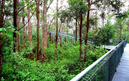 Valley of the Giants - Treetop Walk