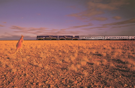 Indian Pacific Kaenguru